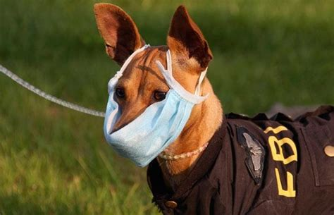 14 Fascinating Dog Facts | The Dog People by Rover